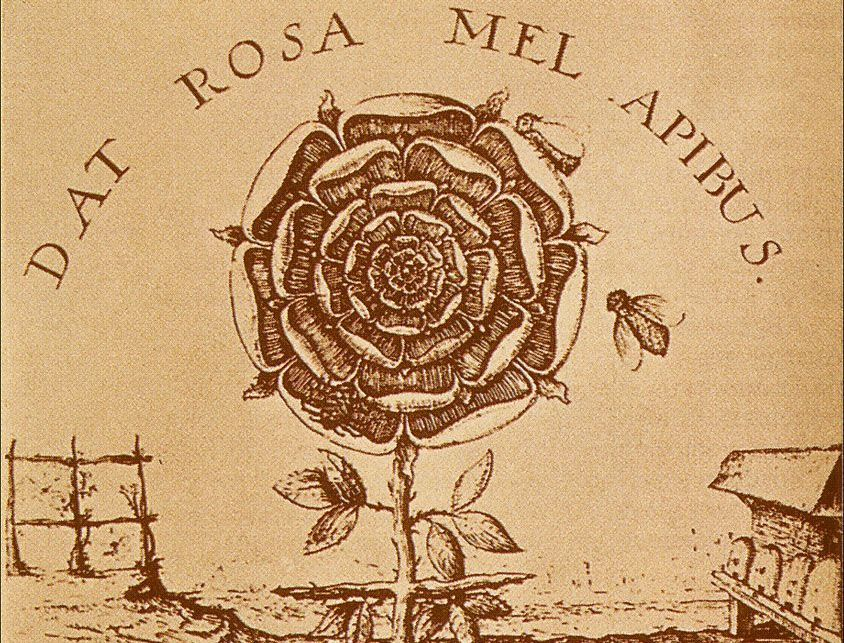 rose.cross.dat.rosa